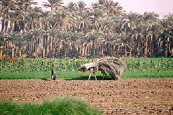 www.d-p-h.info/images/photos/6922_farmer.png