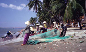 Women hauling in a beach seine at Van Binh An van chai. Resource use in the {van chais} is governed by use rights protected by customary law and practice